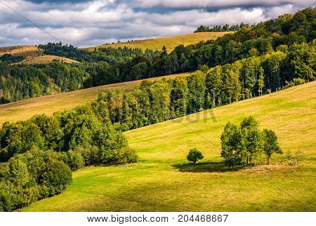 Forest On Rolling Hills Under Cloudy Autumnal Sky