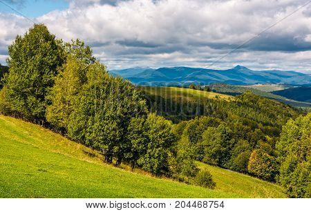 Forest On Hillside Meadow In Mountainous Area