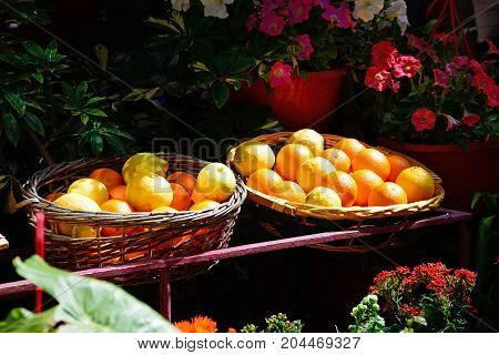Wicker baskets full of oranges and lemons surrounded by plants in the old town Mdina Malta Europe.