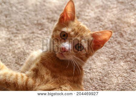 Pets / Kittens / Little kittens .