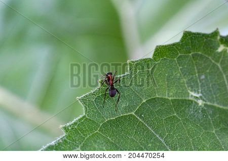 Ant / An ant crawling on the plant
