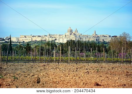 View of the citadel with a vineyard in the foreground Mdina Malta Europe.