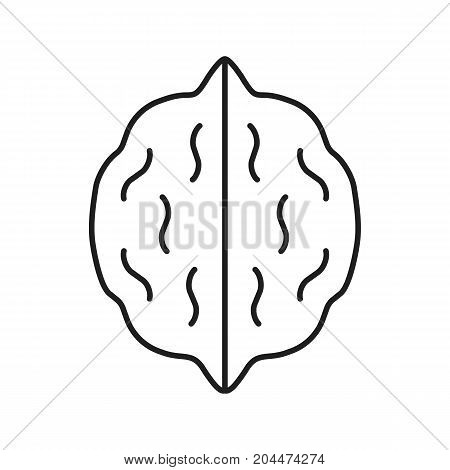 Walnut linear icon. Hazelnut, nut thin line illustration. Autumn season contour symbol. Vector isolated outline drawing