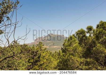 Mountain behind the pines. Mountain landscape on a clear sunny day.