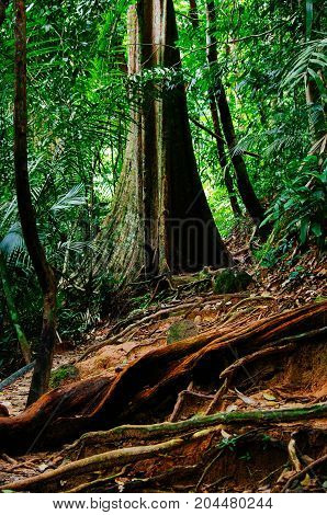 Jungle trails after rain in tropical rainforest of Sabbah Borneo Malaysia