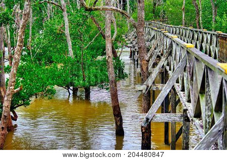Wooden plank bridge observatory of mangrove forest in rain forest of Borneo Malaysia