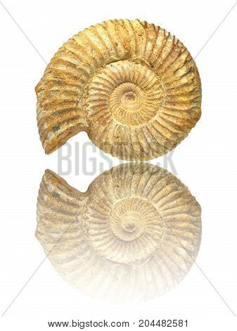 Well preserved fossilization of an extinct ammonite.