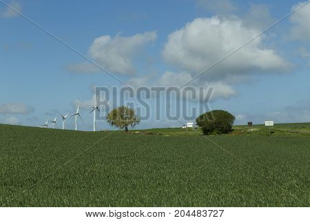 Wind Turbines For Electrical Power Generation In Green Agricultural Fields In Normandy, France. Rene