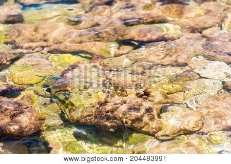 Seabed through crystal clear water in Bayahibe La Altagracia Dominican Republic. Close-up