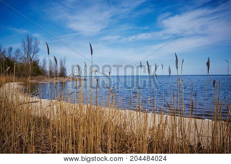 Wild grass of a cane on the lake. Selective focus (on grass).