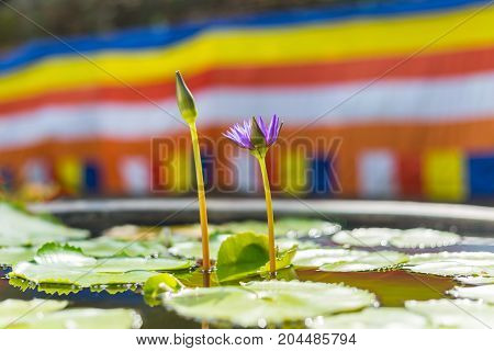 A Purple Lotus Flower And A Buddhist Flag In Chiang Mai, Thailand.