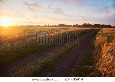 Field ripening wheat at sunset beautiful natural landscape with sunlight. The concept of a rich harvest