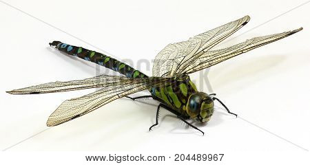 Close up on Dragonfly on white background