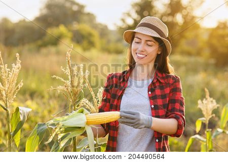 portrait of happy young woman gardener with corn cob in garden. Young farmer harvesting corn . Gardening, agriculture, autumn harvest concept