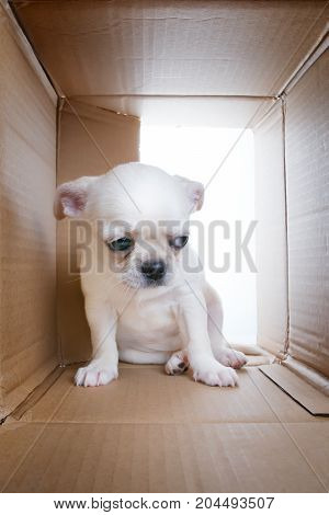 Sad puppy into cardboard box. Sadness loneliness socialization problems and shelter theme