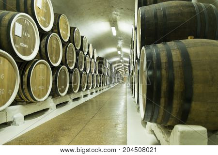 Wine barrels are stored in winery cellar