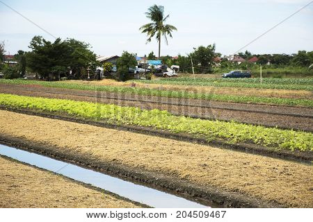 Thai People Prepare Land For Plantation Plant And Vegetable In Garden At Agricultural