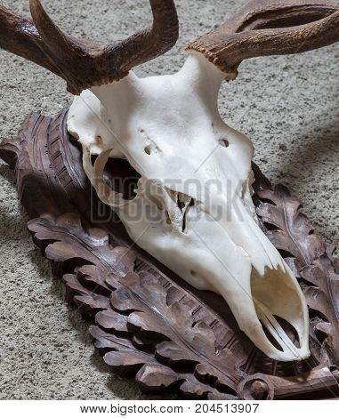 Large Deer Hunting Trophy