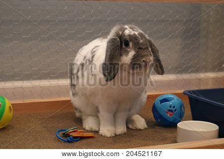 cute bunny with floppy ears sitting quietly