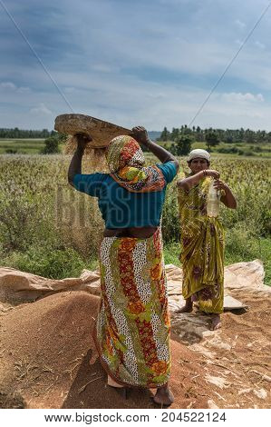 Mysore India - October 27 2013: Two colorfully dressed farm women sift brown buckwheat grain on open green field under blue sky with white clouds in Mellahalli hamlet.
