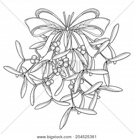 Vector bunch with outline Mistletoe and ornate bow with ribbon isolated on white background. Leaves, berry and branch of Mistletoe in contour style for Christmas winter design or coloring book.