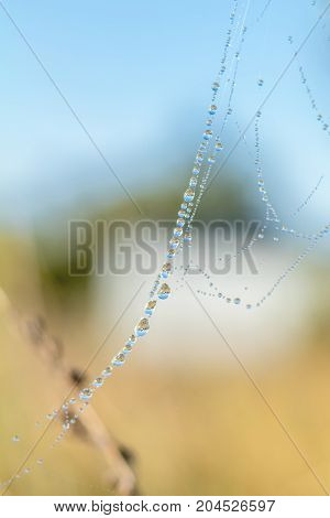 Close Up View Of The Strings Of A Spiders Web. Spider Web With Colorful Background, Nature Series