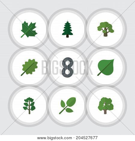 Flat Icon Nature Set Of Tree, Alder, Foliage And Other Vector Objects