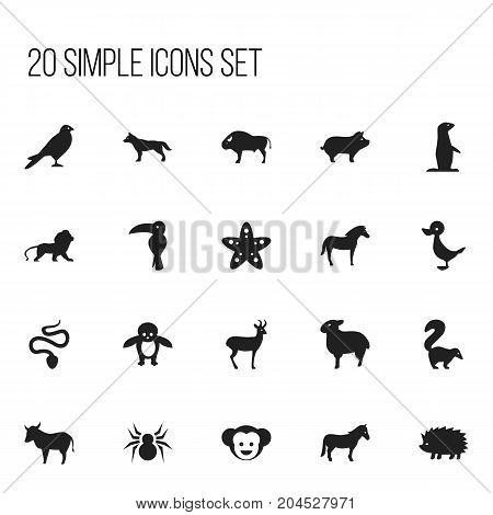 Set Of 20 Editable Zoology Icons. Includes Symbols Such As Skunk, Penguin, Bison And More
