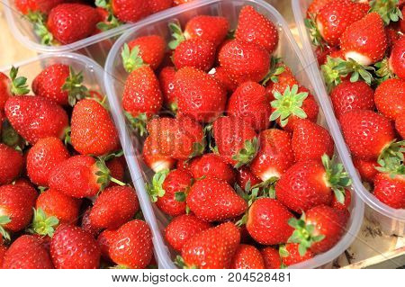 Fresh picked red strawberries in the plastic boxes