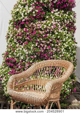 Wicker chair in the background of pansies