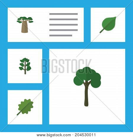 Flat Icon Ecology Set Of Baobab, Linden, Forest And Other Vector Objects