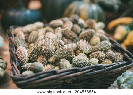 Wattled basket with heap of ripe Cucumis Africanus (also called wild cucumber or wild gherkin) among other vegetables harvested for Thanksgiving Day; shallow depth of field
