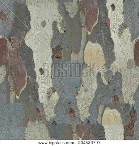 Seamless Texture Bark Background