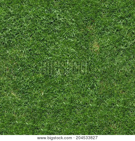 Seamless Green Grass Texture Background
