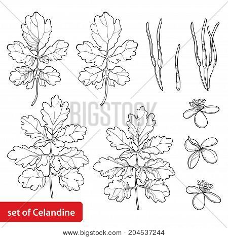 Vector set with outline Celandine or Chelidonium perennial flower, leaf and seed in black isolated on white background. Alternative medicine plant in contour style for summer design and coloring book.