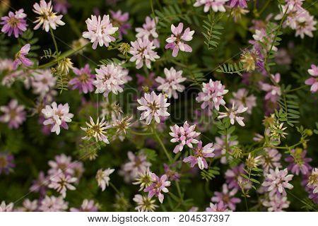 Spring Wild Flower Background.