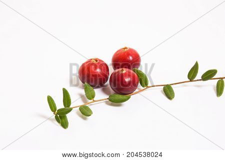 Three cranberries and a sprig with leaves on a white background. Studio, macro.