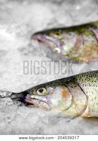 Fresh Norwegian salmon Trout on ice in supermarket