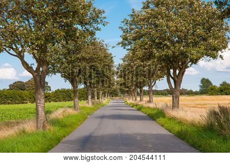 Avenue In The Danish Countryside