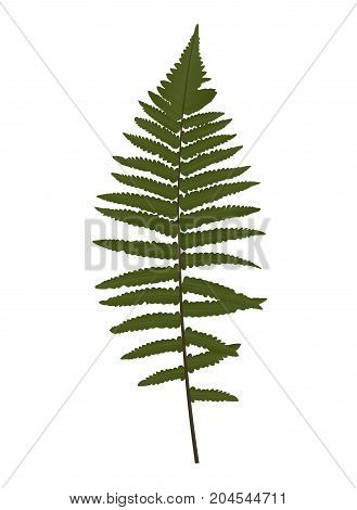 Fern Leaf Silhouette Vector Background Illustration EPS10