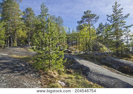 Forest On The Rocky Shore Of Lake Ladoga.