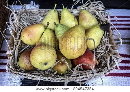 Ripe sweet red and yellow pears lie in a wicker plate on an embroidered towel. Autumn nature concept.