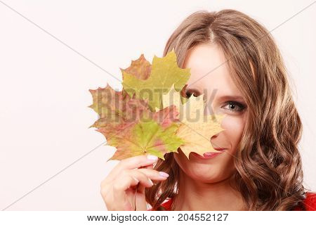 Beauty female autumnal model. Attractive girl long hair wearing warm red sweater with maple leaves in hand