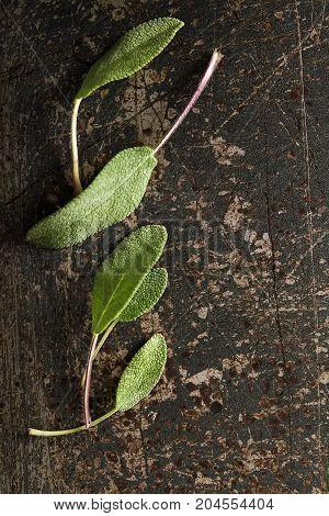 Fresh sage leaves. Italian herbs. Oil for food