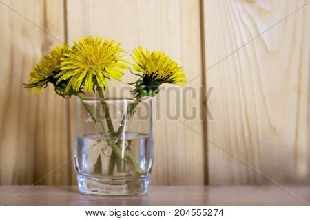 Spring Yellow Flowers - Dandelions (mother And Stepmother) In A Glass On The Table
