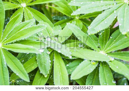 Green Tropical leaves with drops of dew, top view