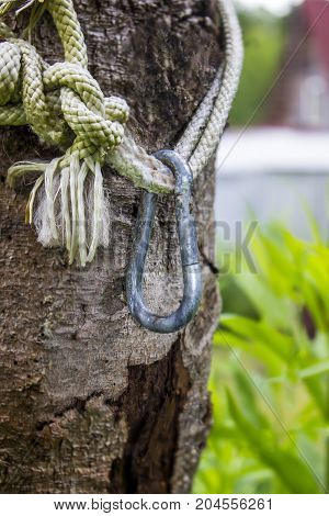 Metal carabiner on a rope with knots on a tree in a garden