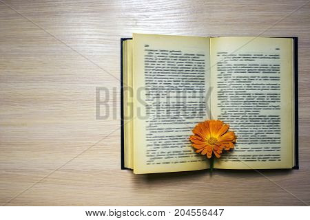 Open book with a bookmark - a Calendula flower on the table