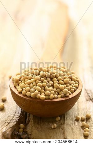 Yellow mustard seeds on wooden spoon photographed on wood with natural light (Selective Focus Focus into the middle of the seeds)