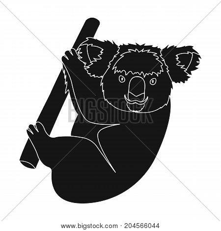 Kuala, marsupial bear on a branch of eucalyptus. Wild mammal of koala single icon in black style vector symbol stock illustration .
